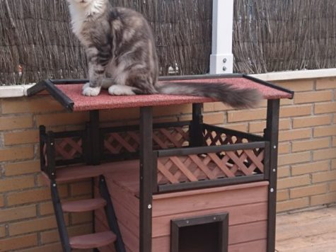 Arbre chat g ant s lection de grands arbres xxl pour chat - Arbre a chat exterieur ...