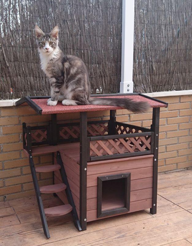 arbre chat ext rieur les meilleurs mod les au bon prix. Black Bedroom Furniture Sets. Home Design Ideas