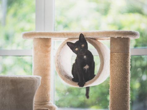 accessoires arbre à chat