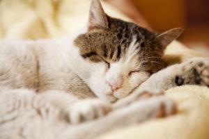 arbre à chat pour chat pantouflard