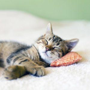 arbre pour chat pantouflard