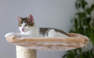 arbre pour un chat casanier
