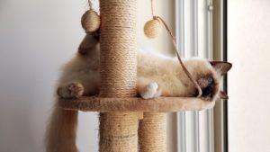 chat joueur dans son arbre à chat