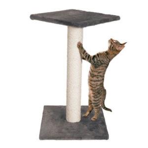 chat et arbre a chat